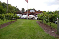 Shown: Several rows of grapes located in front of the Conneaut Lake Winery Store and production facility.